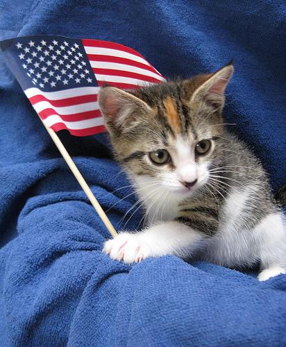 cat-flag3